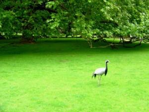 The Crane and The Oak Tree